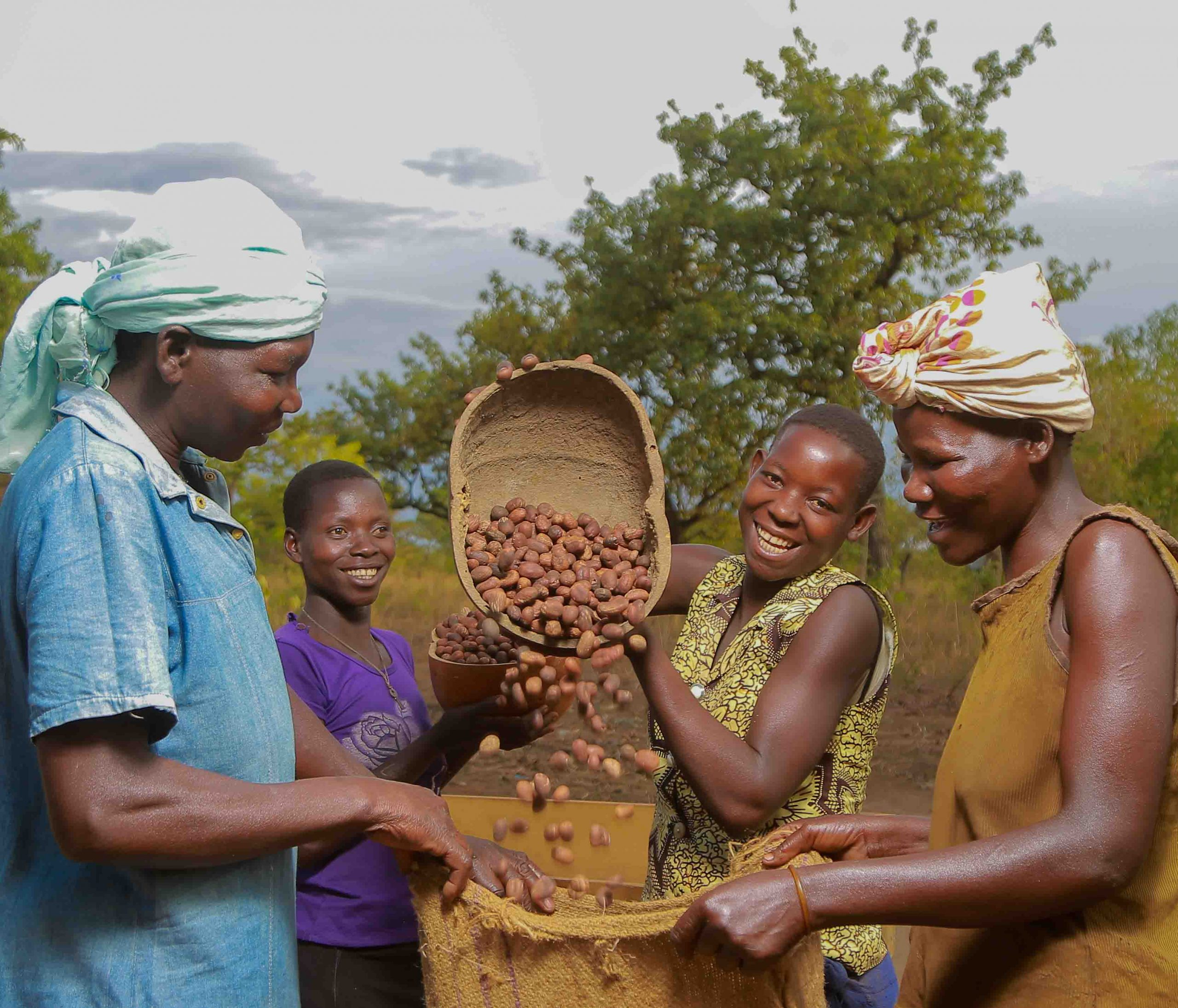 Bagging the Nilotica shea nuts